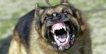 mean-dog